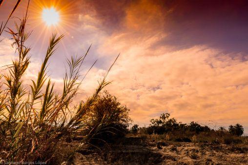 El sol entre las cañas